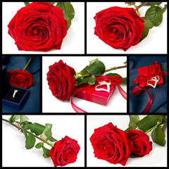 collage rose