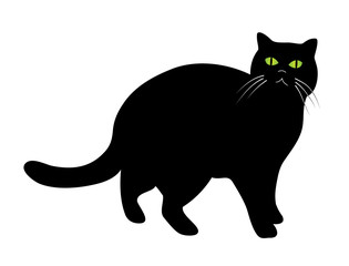 Standing black cat with green eyes