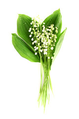 Wall Murals Lily of the valley Lily-of-the-valley on white
