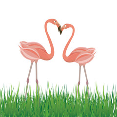 Two flamingo in love. Vector illustration
