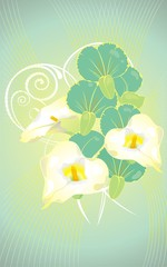 Beautiful vector card flowers and an orchid branch