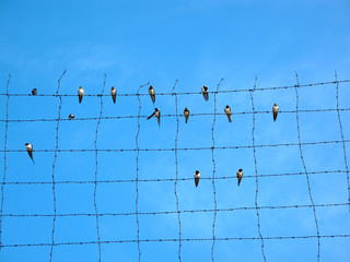 Birds on barbed wire under blue sky.