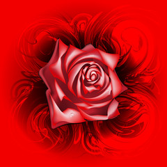 Red rose on an abstract background, eps10