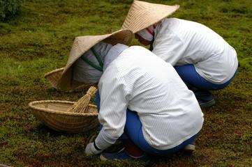 Japanese Gardeners