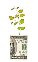 Tree sprout growing from dollar bill