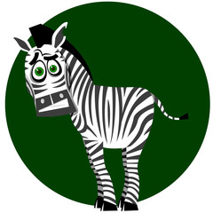 Amusing zebra
