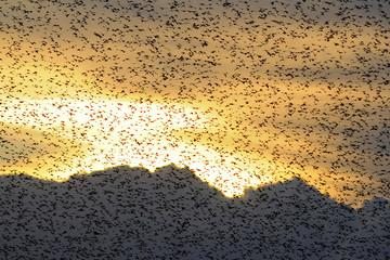 storni al tramonto