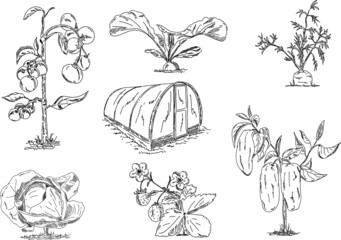 vegetables with greenhouse