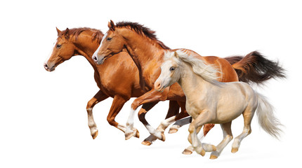 Wall Mural - Three horses gallop