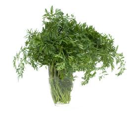 carrot's foliage