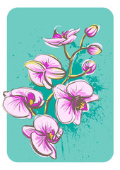 Vector orchid flower