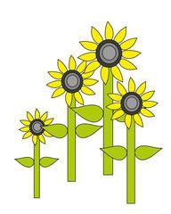Vector illustration. Sunflower.