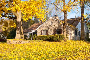 House Philadelphia Yellow Fall Autumn Leaves Tree