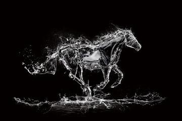Fototapeta water horse black