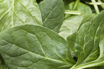 Fresh Green Spinach Background