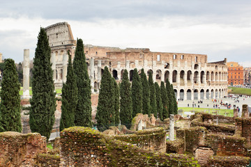 Wall Mural - The Colosseum