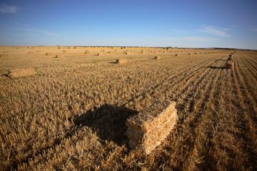 Straw bales in a Saskatchewan field