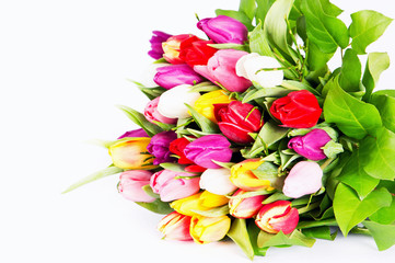 Colorful fresh spring tulips flowers on white
