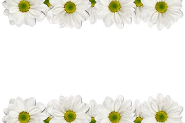 Door stickers Narcissus Flowers frame on white background