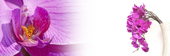 Photo sur Toile Orchidée Bannière orchidée rose