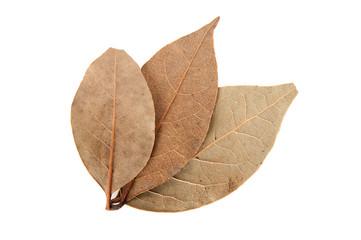 bay leaf on a white background