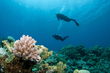 coral and silouetted scuba divers