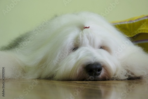 "古牧"" Stock photo and royalty-..."