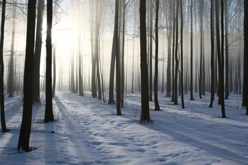 Keuken foto achterwand Bos in mist Path in the winter coniferous forest at dawn