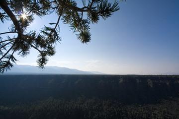 Sunrise Rio Grande River Gorge Pine Tree Branch NM