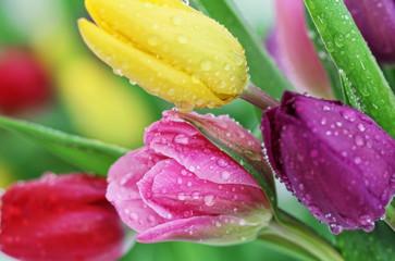 Obraz Spring tulip flowers close-up - fototapety do salonu
