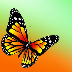 butterfly  on color background. 3d render