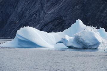 Iceberg bird