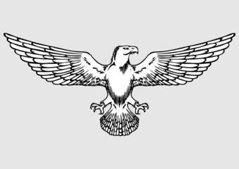 doodle eagle vector