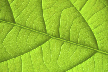 Green leaf background texture. Macro.