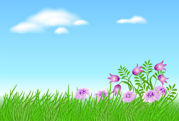 Meadow flowers with green grass