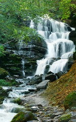 waterfall in forest high resolution