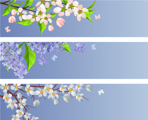 Collection of blossoming branches of apple,lilac and cherry