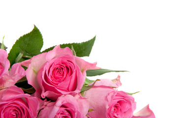a bunch of pink sweet roses isolated on white