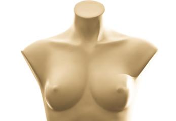 Sculpted Woman Upper Torso Mannequin