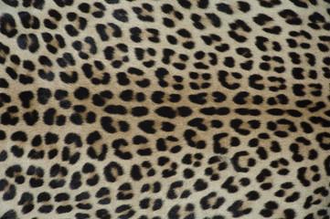 Fotobehang Luipaard pelle di leopardo