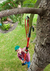 Cutting Tree Branch