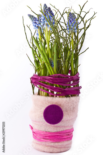 blaue fr hlingsblumen in rosa topf freigestellt stockfotos und lizenzfreie bilder auf fotolia. Black Bedroom Furniture Sets. Home Design Ideas