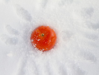 The cooled tomato among ice close up