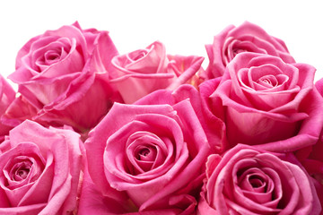 Pink roses, may be positioned on bottom of page