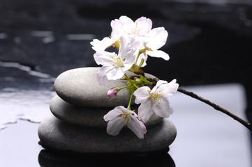 therapy stones with white flower