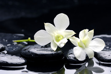 therapy stones with orchid