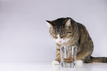 Katze und das Futter im Glas