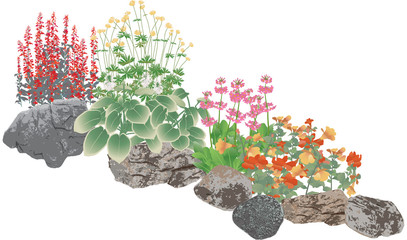 Pond plants or rockery edging plants