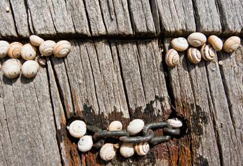 ,snails that crawl on wood,