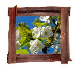 alter Holz  Rahmen Frühling Kirschblüten